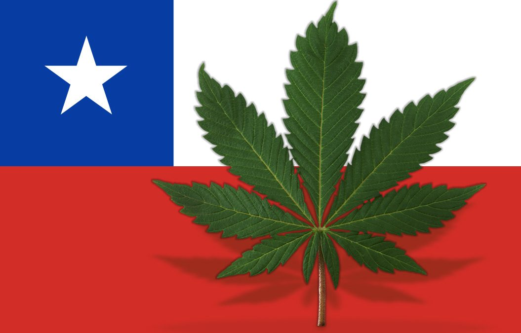 Cannabis in Chile? Not So Fast