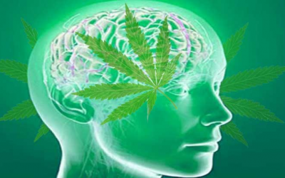 Revolutionary Study Shows Cannabis Protects Traumatized Brains And Helps Them Heal