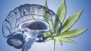 Brain and Cannabis