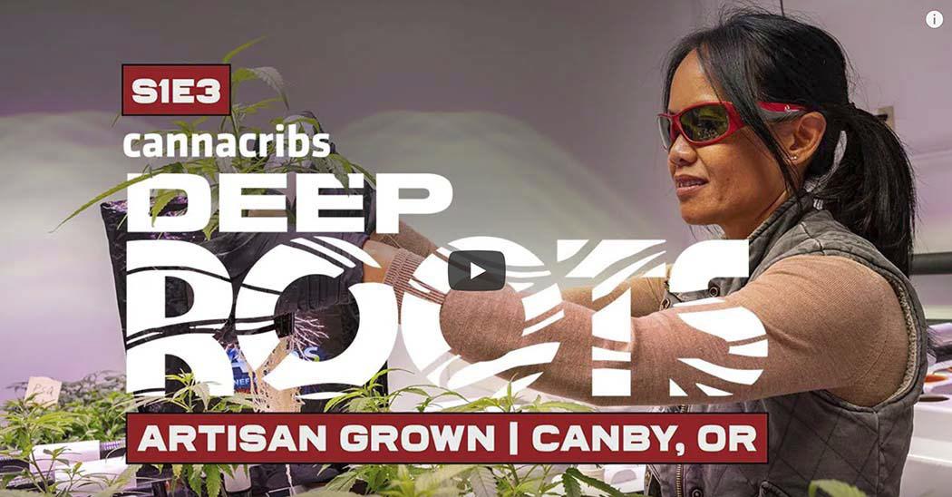 Video: Veteran Hydroponically Grows 46% THCA Cannabis Strain