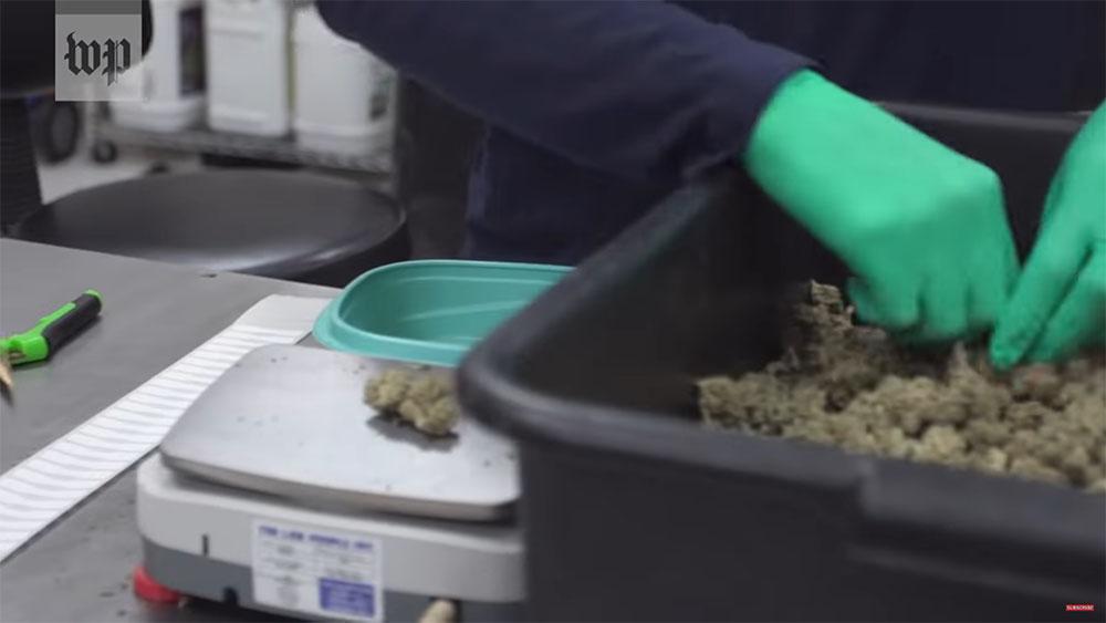 Cannabis industry experiencing many highs and lows as coronavirus shutdown continues