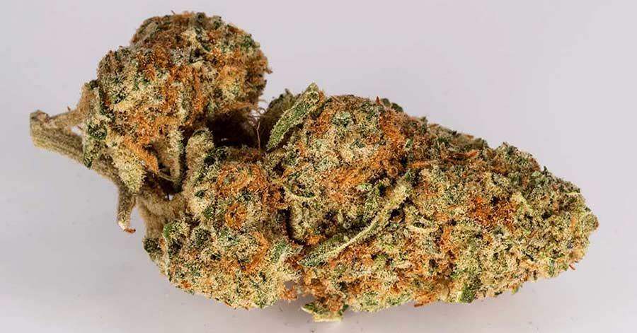 Orange Skunk – Cultivar Review (Sativa)