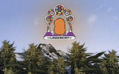 Strain Review – Lazercat Cannabis Live Rosin