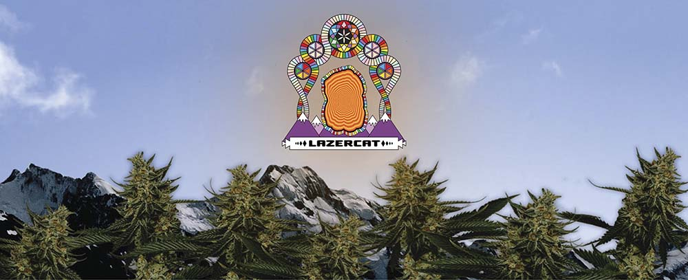 Strain Review – Lazercat Cannabis Live Rosin