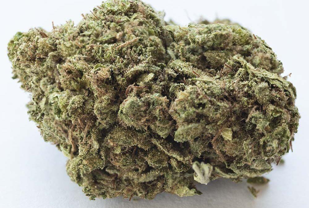 White Rhino Cannabis Strain Review