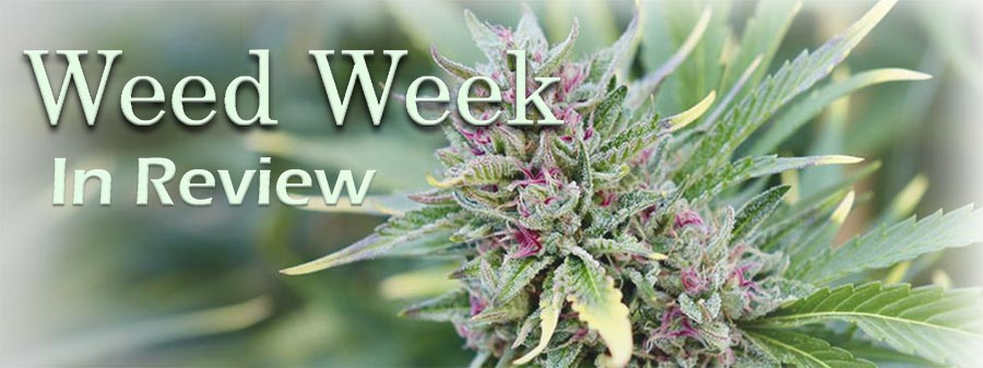 Weed Week in Review February 14, 2021