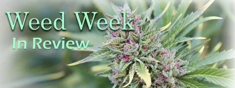 Weed Week in Review February 5, 2021
